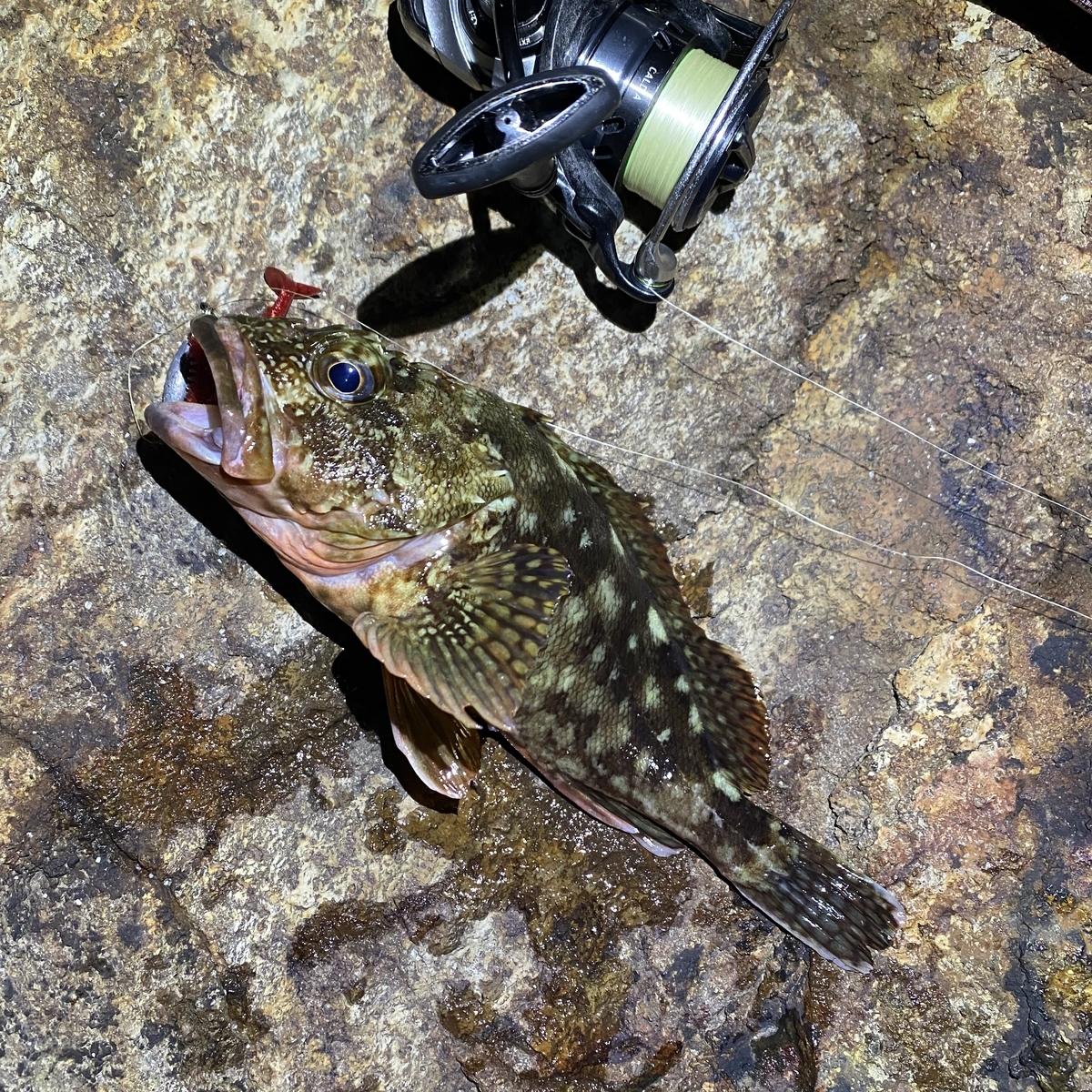 f:id:yu-kin-fishing:20210813111425j:plain