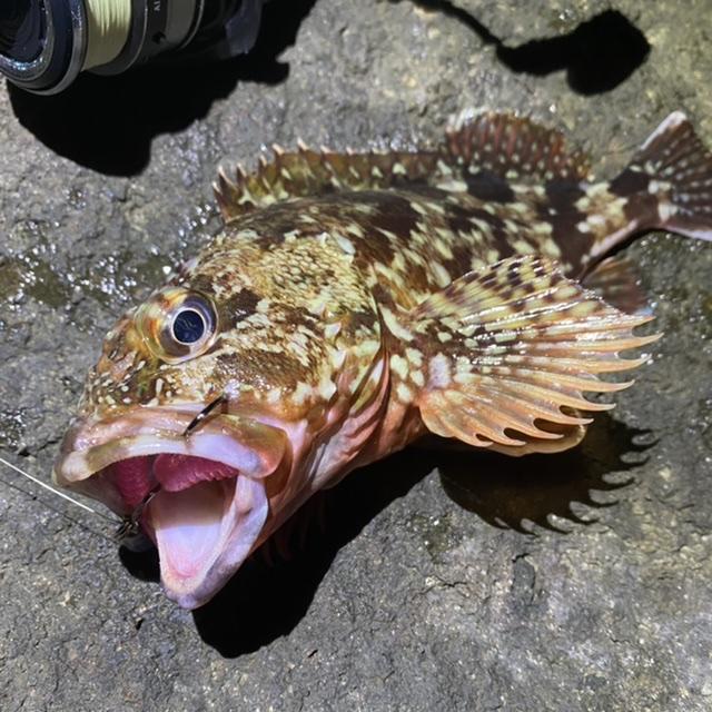 f:id:yu-kin-fishing:20210826094225j:plain