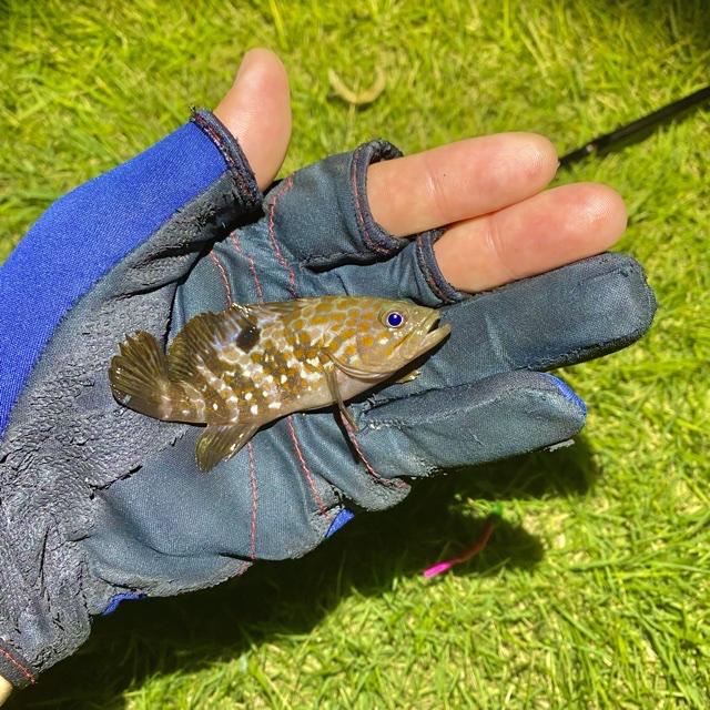 f:id:yu-kin-fishing:20210903131641j:plain