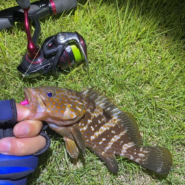 f:id:yu-kin-fishing:20210903131654j:plain