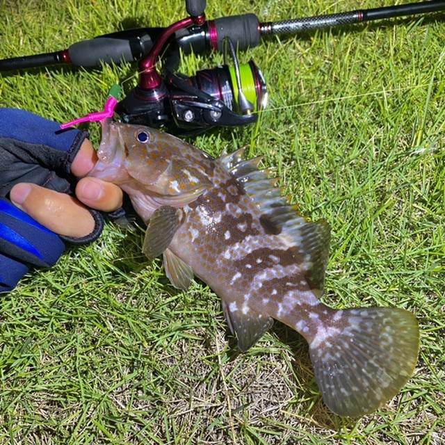 f:id:yu-kin-fishing:20210903131711j:plain