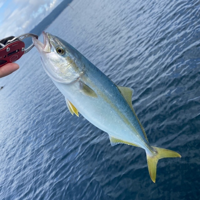 f:id:yu-kin-fishing:20210907121904j:plain