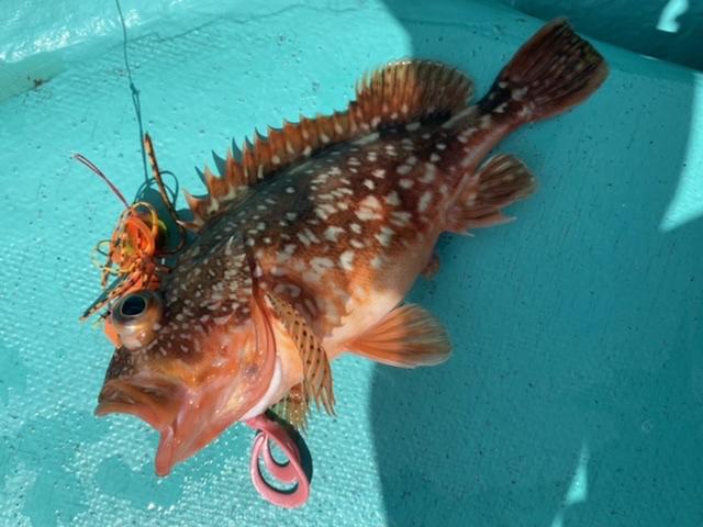 f:id:yu-kin-fishing:20210907121945j:plain