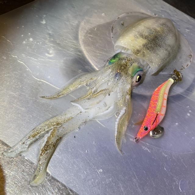 f:id:yu-kin-fishing:20211001220502j:plain