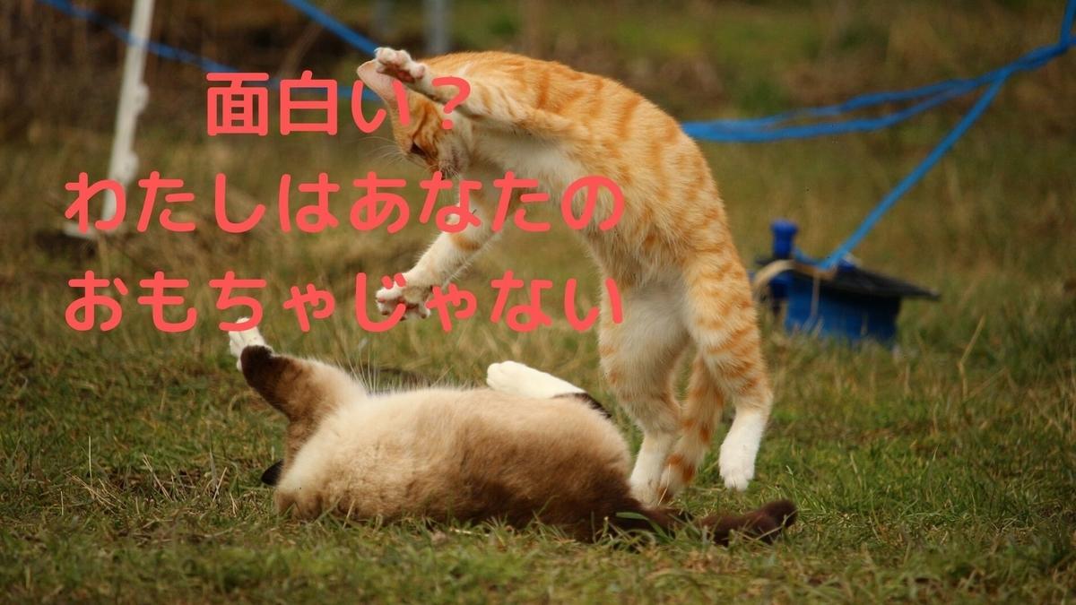 f:id:yu-zu_ki:20200528201916j:plain