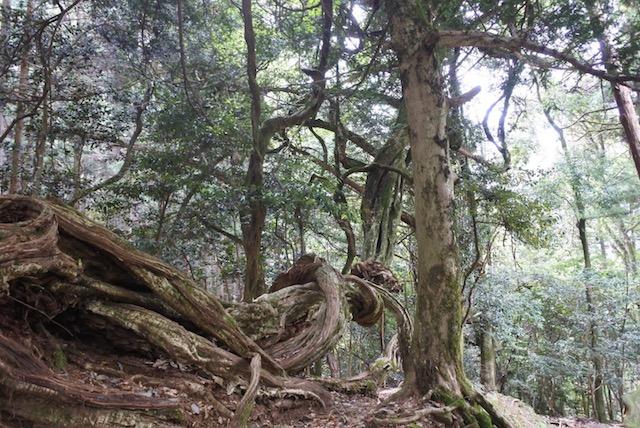 下山途中、荒々しい木々も