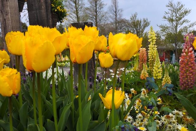 flowergarden2