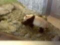 アドベンチャーワールド パンダ 8