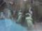 アドベンチャーワールド ペンギン 1