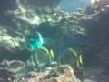 美ら海水族館 魚 1