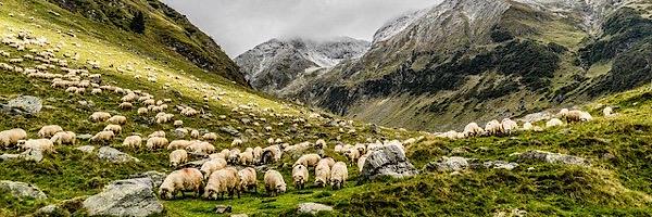 睡眠をパターン化させる脳のスイッチは羊を数える