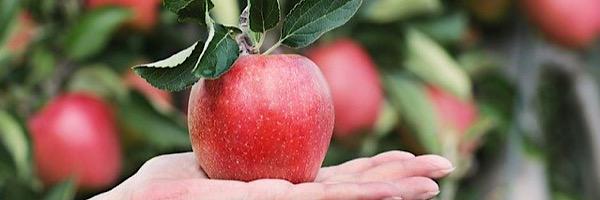 健康になるフルーツのる正しい取り方は手のひらにのるぐらい