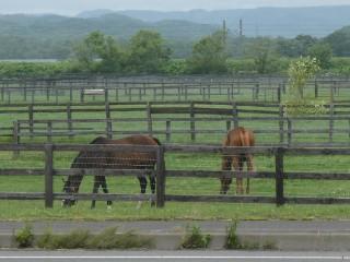 牧場・サラブレッド放牧風景写真