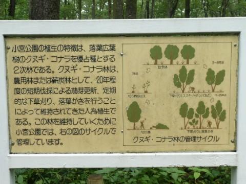 小宮公園写真