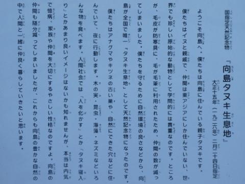 タヌキの里・向島写真