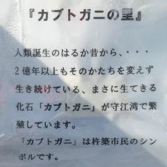カブトガニ解説写真
