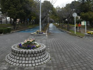 大野川緑陰道路写真