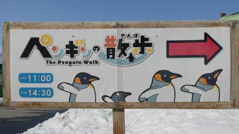 旭山動物園・ペンギンの散歩看板写真