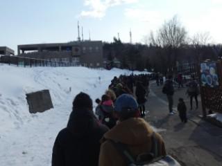 旭山動物園・ペンギンの散歩観客写真