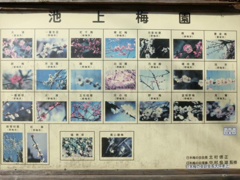 池上梅園のウメ解説板写真