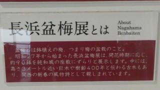 長浜盆梅展解説写真