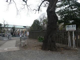 池上本門寺・力道山墓所案内写真