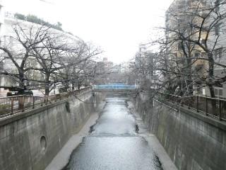 目黒川写真
