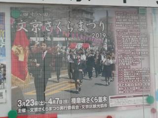 文京さくらまつりポスター写真
