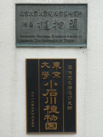 小石川植物園写真
