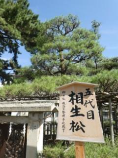 高砂神社・相生松写真