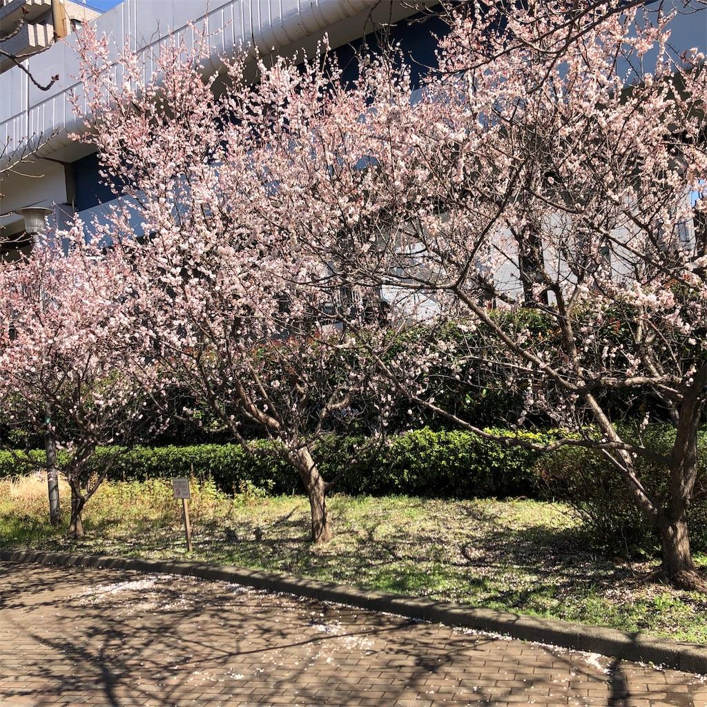 f:id:yuakuma:20190308181658j:image