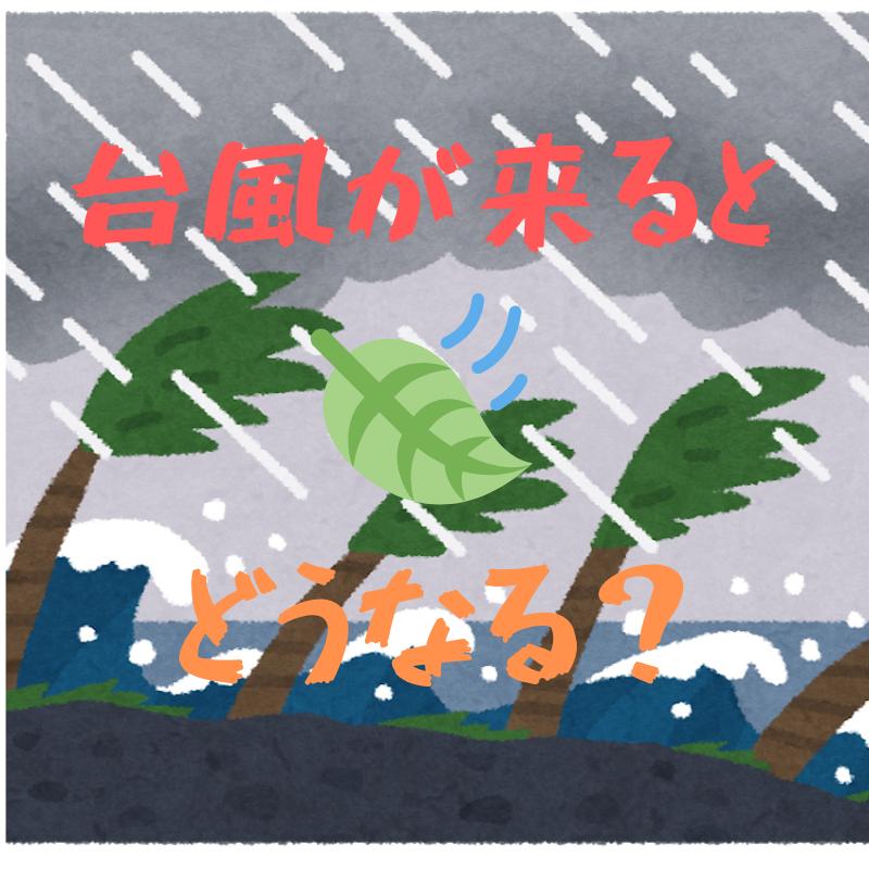 f:id:yubayashi88:20191012140352p:plain