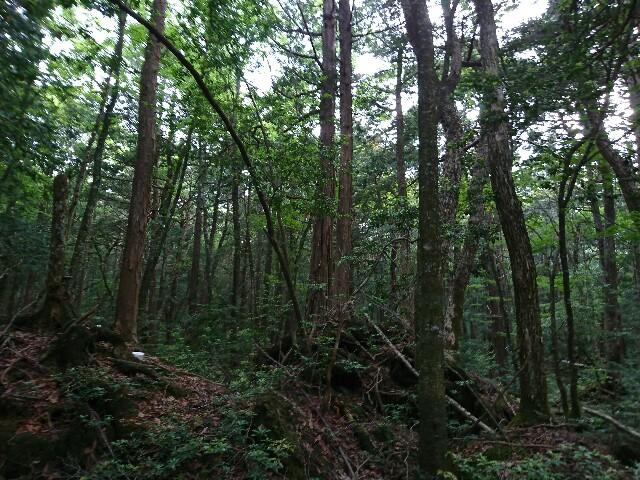 f:id:yubinohara:20180531085213j:image