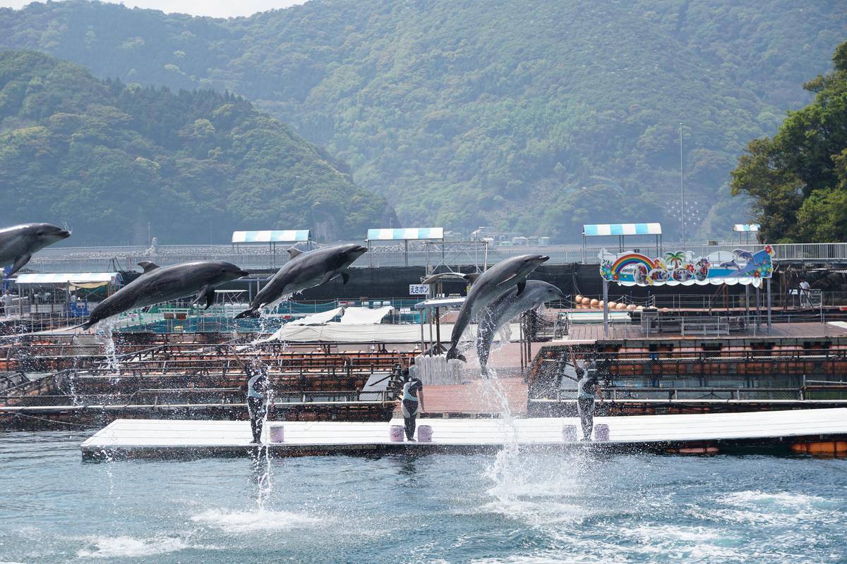 イルカ 仲間 ジャンプ