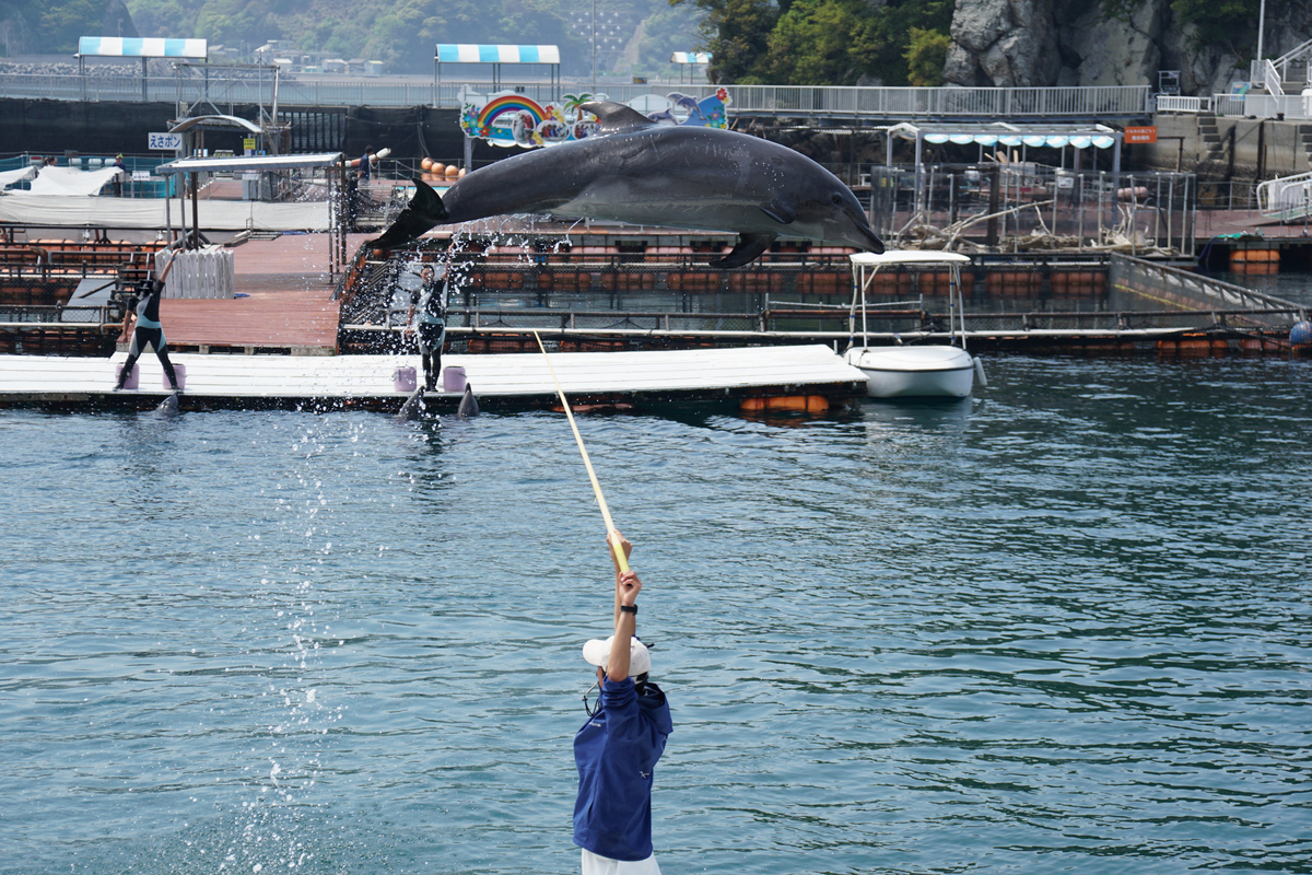 イルカ 大ジャンプ 高い