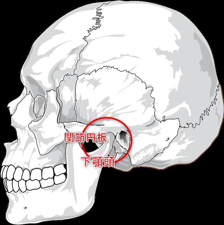 顎関節症 顎関節 イラスト