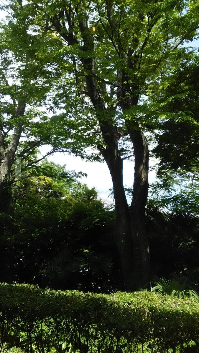 f:id:yudaisuzuki:20190518131148j:plain
