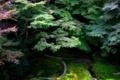 京都新聞写真コンテスト 幻の庭-瑠璃光院にて-