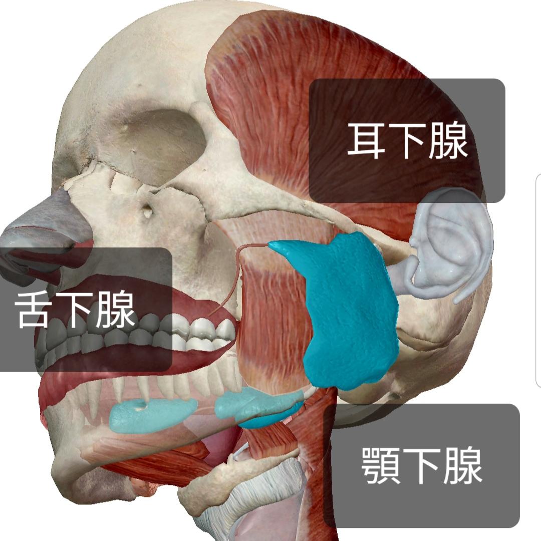唾液過多症のセルフケア