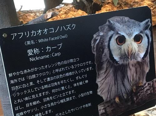 f:id:yuhei2261:20160614162737j:plain