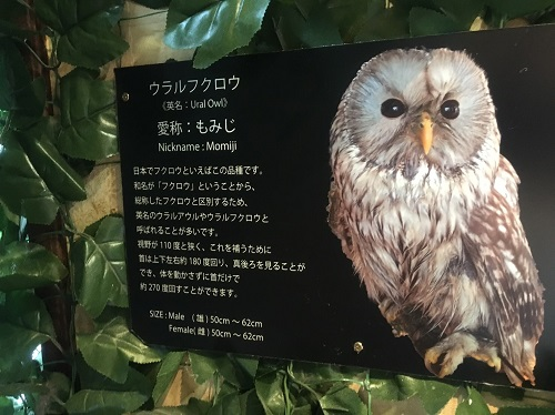 f:id:yuhei2261:20160614164438j:plain