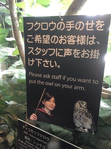 f:id:yuhei2261:20160614165449j:plain