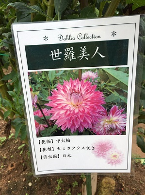 f:id:yuhei2261:20160922205657j:plain