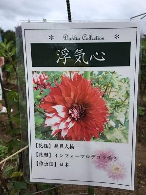 f:id:yuhei2261:20160922210046j:plain