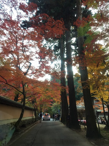 f:id:yuhei2261:20161117174802j:plain