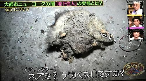 f:id:yuhei2261:20170102014844j:plain