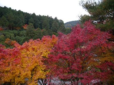 f:id:yuheipapa:20121210012907j:image