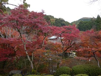 f:id:yuheipapa:20121210013231j:image