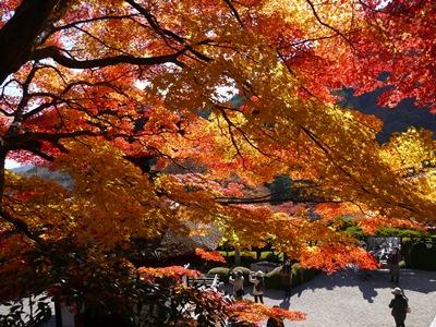 f:id:yuheipapa:20121210013527j:image