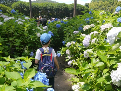 f:id:yuheipapa:20130617001828j:image